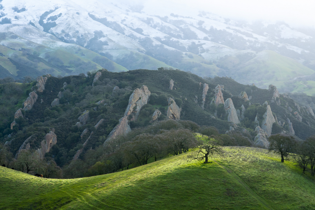 Just another early morning at work for a Sequoia biologist performing surveys near Shell Ridge after a light dusting of snow on Mt. Diablo.