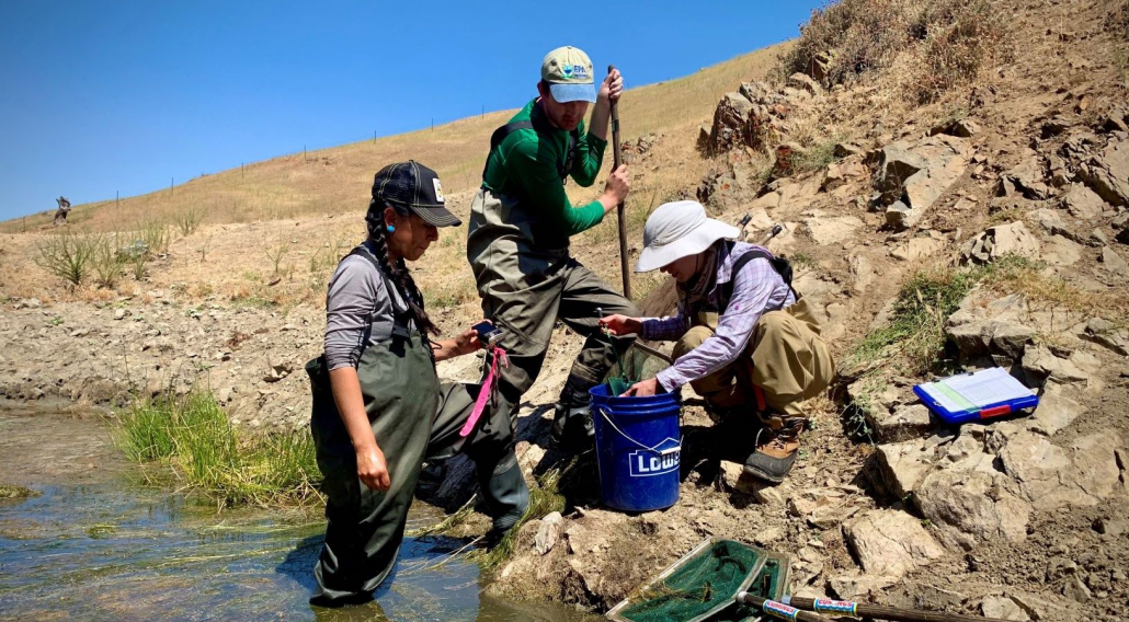Sequoia technical specialists Brett, Liz, and Julie performing CA tiger salamander and CA red-legged frog sampling on a pond for a potential conservation easement on private property in Hollister.