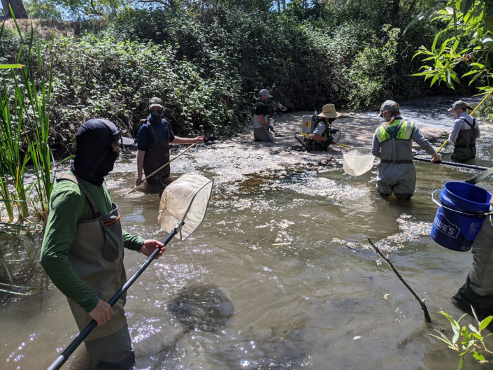 Sequoia Principal, Brett Hanshew, and staff biologists leading a fish rescue on the Llagas River for Valley Water District during a flood protection project.