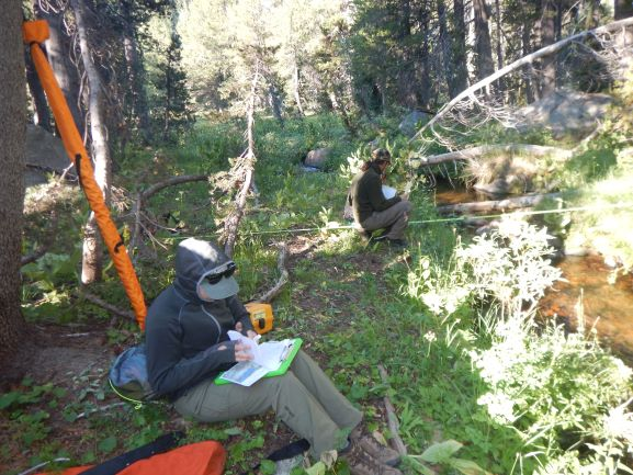 Sequoia staff biologists looking chilly while conducting botanical surveys along transects in the Sierras.