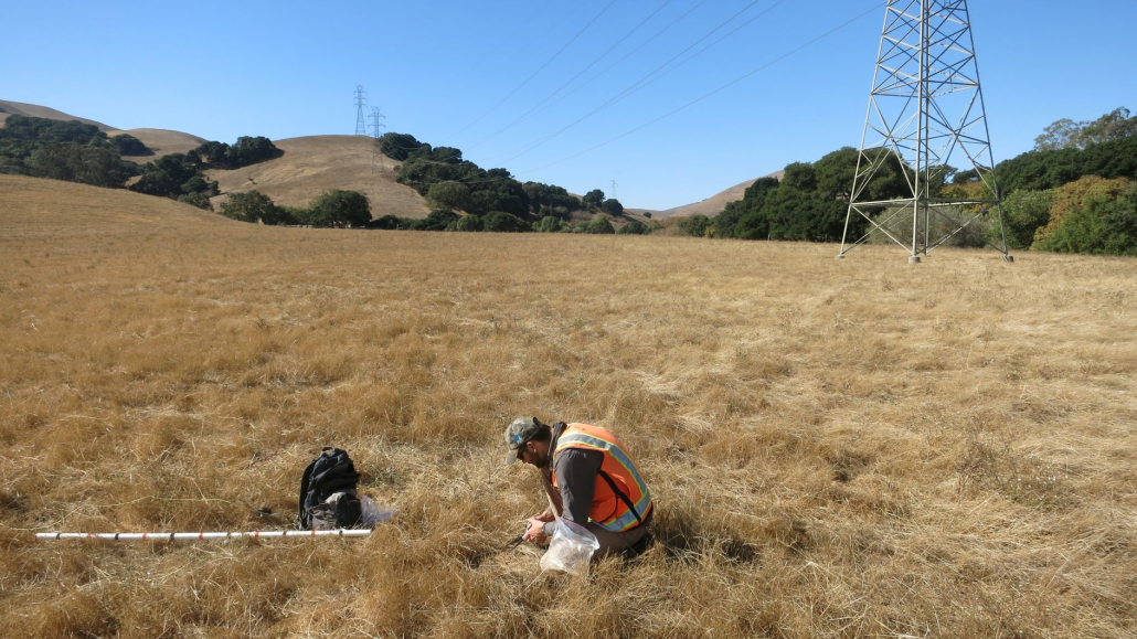 Sequoia's Principal, Tashi MacMillen, performing residual dry matter surveys to meet the requirements of a long-term management plan for a conservation easement in Monterey County.